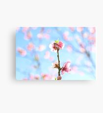flowering pink peach blossoms Canvas Print