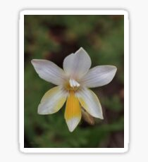 Freesia Sticker