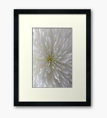 white Chrysanthemum macro Framed Print
