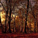 Woods by Anne Staub