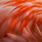 Flamingo Feathers by JMChown