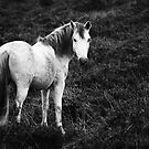 Horse by Anne Staub