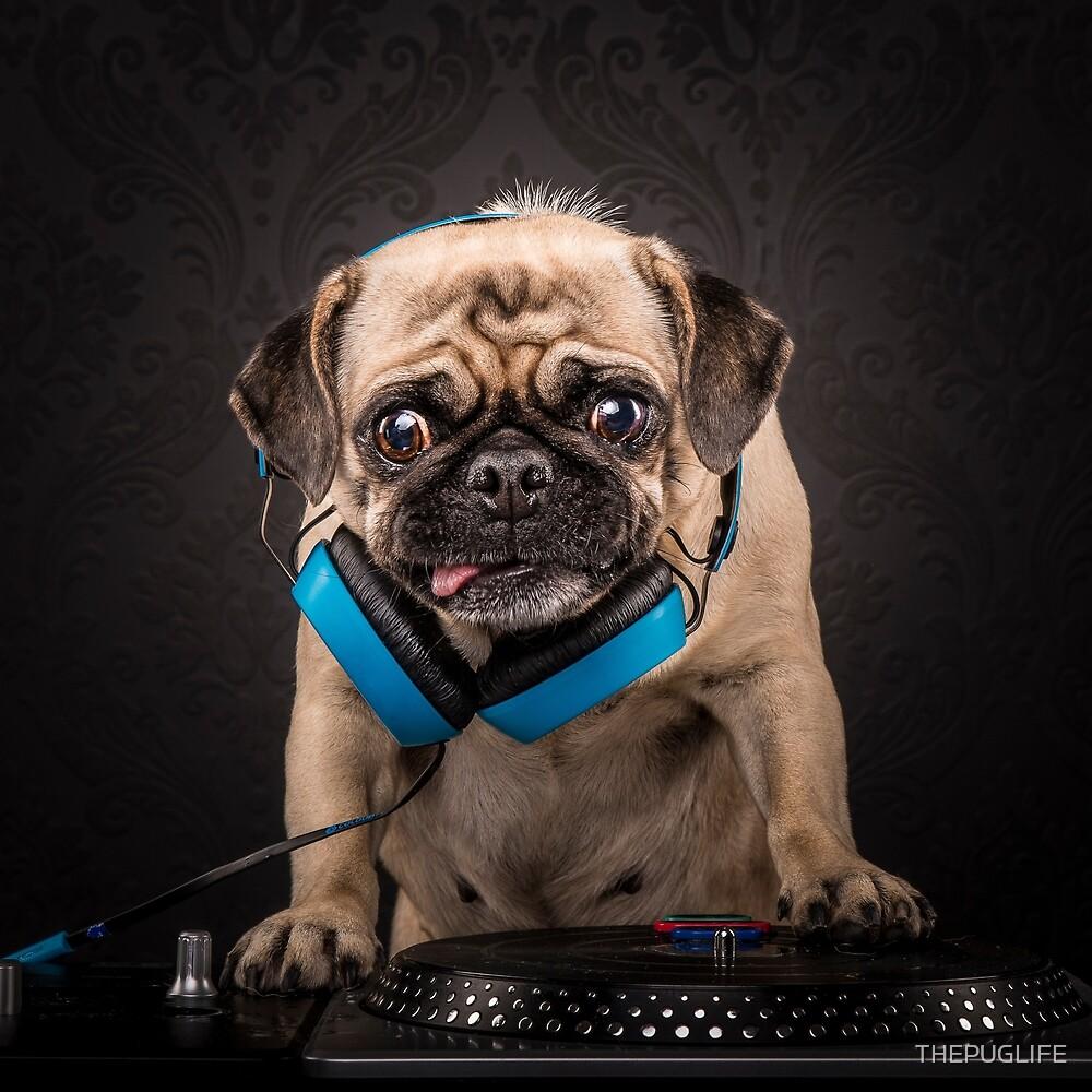 The Pug Life - Pug Master Flash by THEPUGLIFE