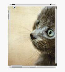 Kitten XV iPad Case/Skin