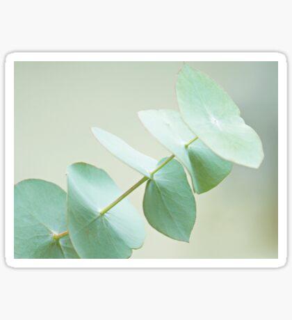 Eucalyptus Sticker