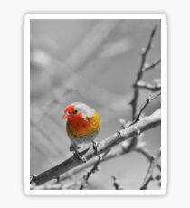 Melba Finch - Selective Coloring - Wildlife Colors of Gold and Red Sticker