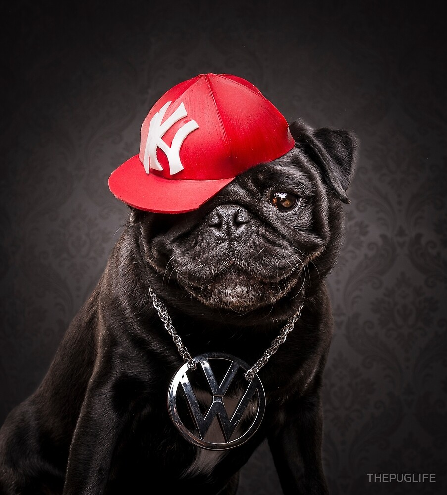 The Pug Life - MC Beastie by THEPUGLIFE