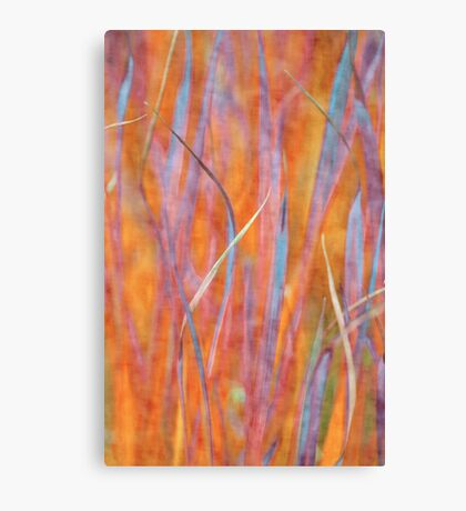 Living colors Canvas Print
