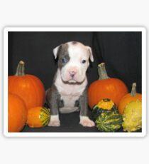 What Is Halloween ?? Sticker