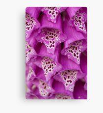 Floxglove Flowers Canvas Print