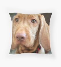 vizsla second Throw Pillow