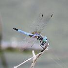 Dragon Wings by Bob Hardy
