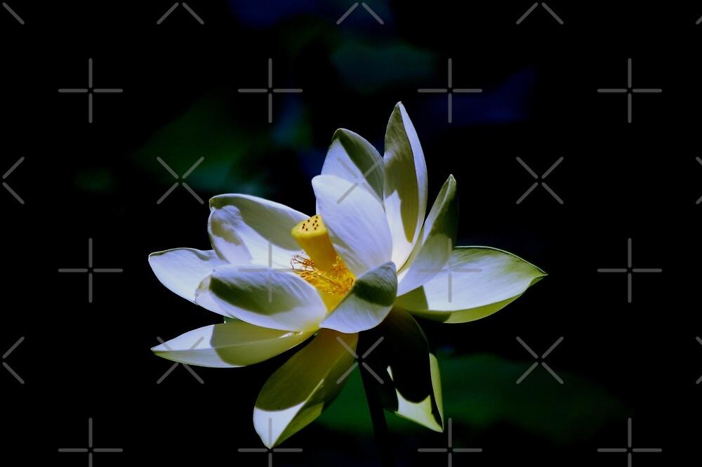 Lotus III by loiteke