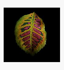 Funky Leaf Photographic Print