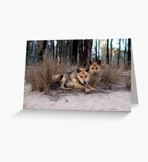 Watchful Dingoes Greeting Card