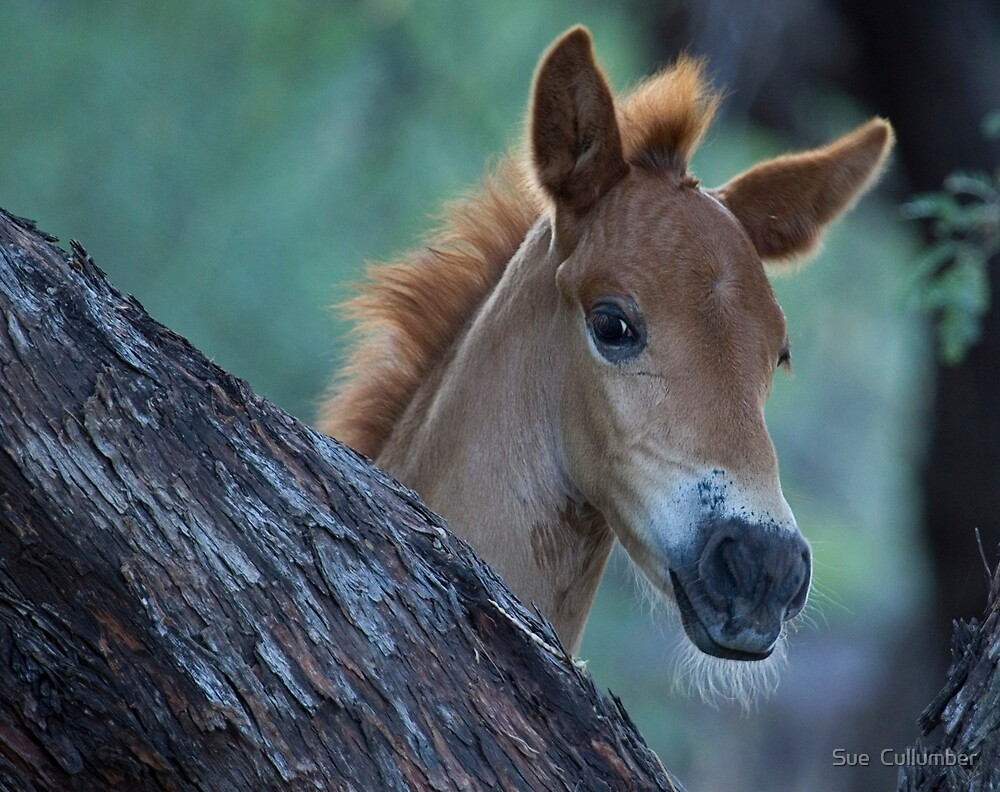 Curious One by Sue  Cullumber