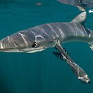 It's Sharky Time by terry goss
