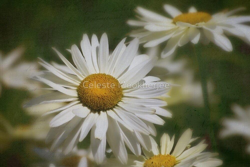 Dreaming of daisies by Celeste Mookherjee