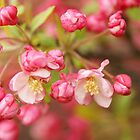 Blossoms Of A Tree by Tina Hailey