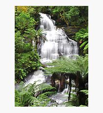Triplet falls with Australian tree ferns Photographic Print