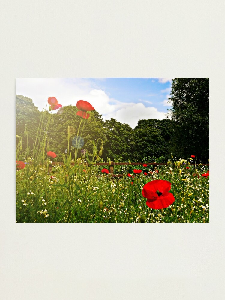 Alternate view of Sun kissed poppies Photographic Print