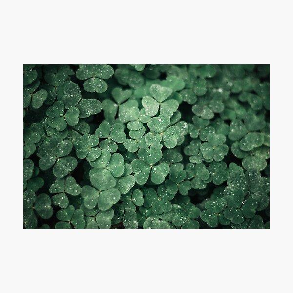 dark green shamrocks with raindrops Photographic Print
