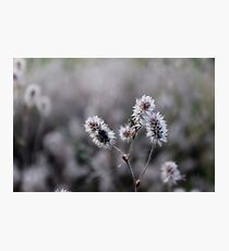 Beautiful plant Photographic Print