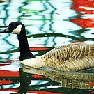 goose swimming by xxnatbxx