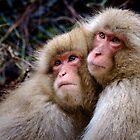 « Les frères macaques » par Jonathan B. Roy