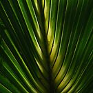 Fronds  by Elizabeth Rodriguez