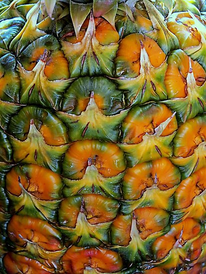 Pineapple Pattern by Diane Arndt
