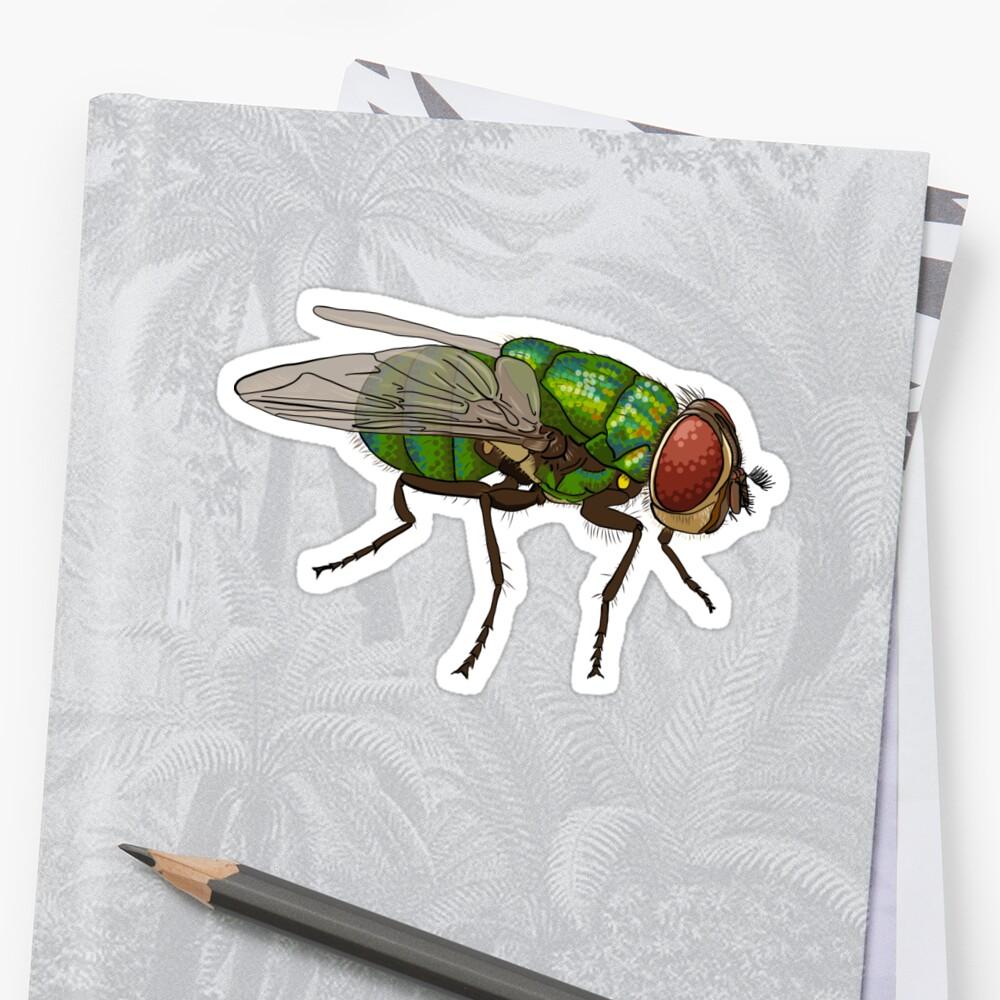 Chrysomya megacephala blowfly by the vexed  muddler