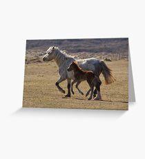 Pembrokeshire Ponies Greeting Card