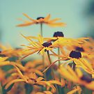 Flowers. Yellow Flowers. by Patrick Horgan