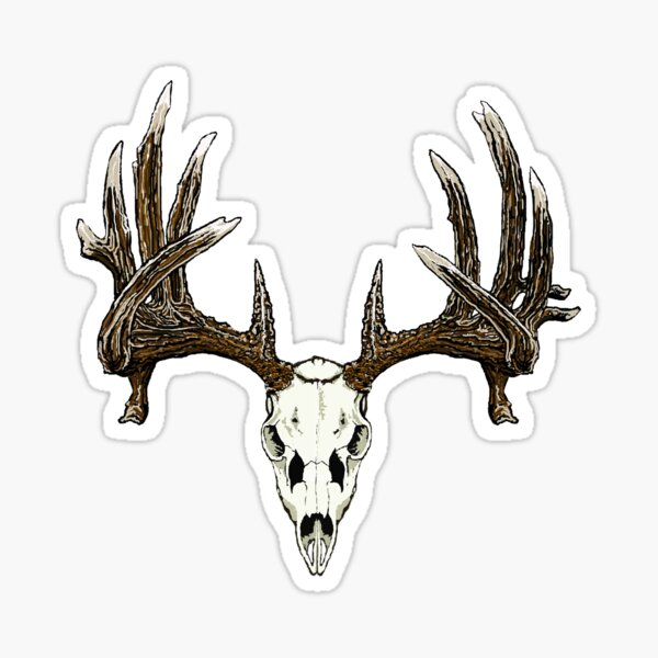 Whitetail deer skull  Sticker