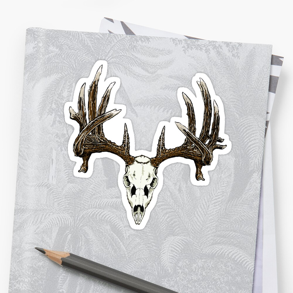 Whitetail deer skull  by saltypro