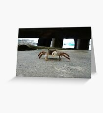 Crab is not amused Greeting Card