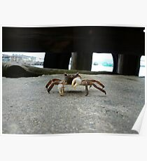 Crab is not amused Poster