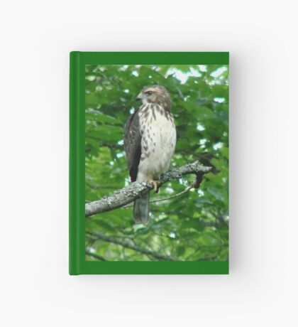 Young Red-Tailed Hawk Hardcover Journal
