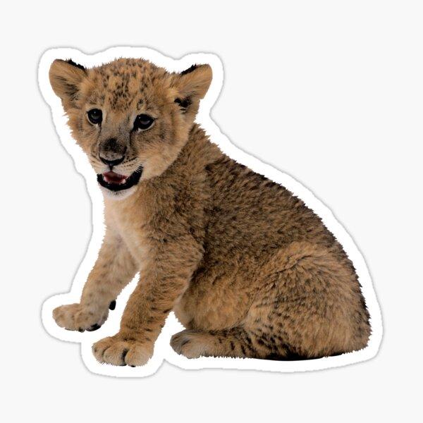Transparent Lion Cub Sticker