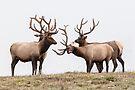 Big Bucks by Eivor Kuchta