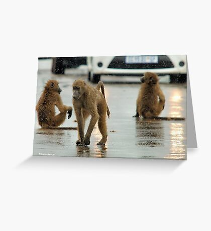 COME RAIN, COME SNOW, BABOONS ARE ALWAYS ON A SHOW! Greeting Card