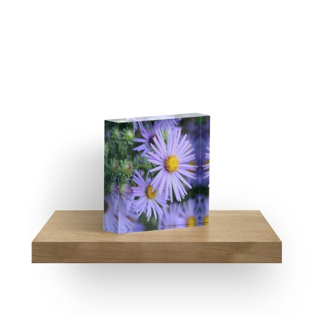 Studio Dalio - Hardy Blue Aster Flowers Acrylic Block