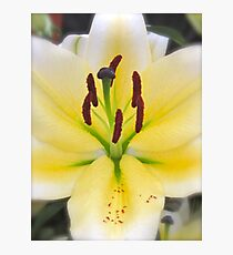 YELLOW LILY MACRO Photographic Print