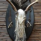 it will grow- skull mount with plant growth by resonanteye