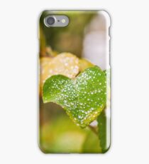 Early Autumn leaves iPhone Case/Skin