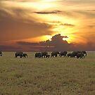 Going Home - A Serengeti Sunset, Tanzania by Adrian Paul