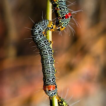 Caterpillar Kisses by JoelDevlin