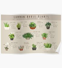 Common House Plants Infographic Poster