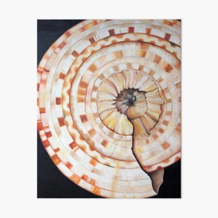 Sundial Shell Art Board Print